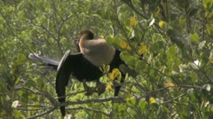 Bird in Tree - stock footage
