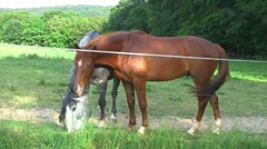 Horses 09 Stock Footage