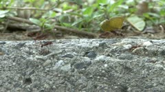 Ants Carrying Food - stock footage