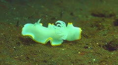 Nudibranch Stock Footage