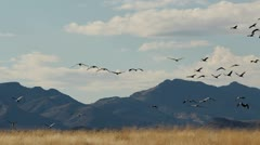Birds Fly Landscape Stock Footage