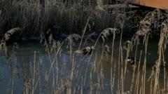 Wild Ducks Fighting On Frozen Water Stock Footage