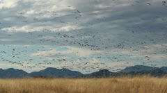 Birds Desert Grassland Stock Footage