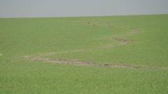 Dirt path in fields Stock Footage