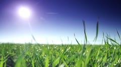 Beautiful green field Stock Footage