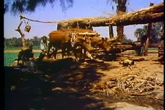 Waterwheel, irrigation system in a village of Egypt outside of Luxor 108044 Stock Footage