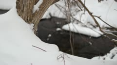 Tree in snow rack focus to creek Stock Footage