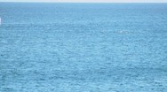 Whale003 Stock Footage