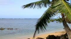 Coconut palm tree sways in the tropical Hawaiian breeze along a sandy beach Stock Footage