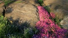 Spring flowers and granite rocks Stock Footage