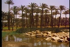 The site of the ancient city of Memphis outside of Cairo in Egypt 108022 Stock Footage