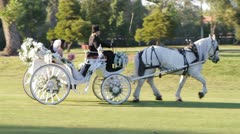 Horse and Carriage Stock Footage