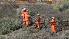 Woman state prisoners cleanup the hills - stock footage
