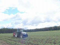 Tractor plow up fir tree seedling. Worker in back. Forest plant. - stock footage