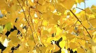 Stock Video Footage of Autumn Leaves Blowing in the Wind