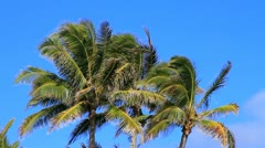 Palm Trees in the Tropical Breeze - stock footage