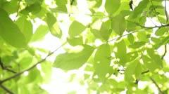 Foliage Stock Footage