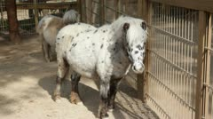 Pony - stock footage