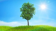 Stock Video Footage of Growing up tree animated background. HD.