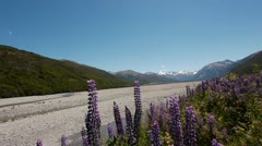 Stock Video Footage of NZ Mountain Road Flowers
