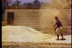 Egyptian winnows wheat by hand by throwing it into the air, outside Luxor 108055 Stock Footage