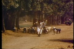 A herd of goats on a road in a village outside of Luxo Stock Footage