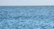 Whale006 Stock Footage