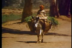 Young Egyptian girl rides a donkey 108059 Stock Footage