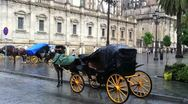 Horse Carrage in the Rain in Seville Stock Footage