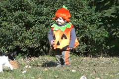 Pumpkin Baby and cat 1 Stock Footage