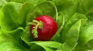 Lettuce and red radish, rotate Stock Footage