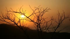 Sunset And Bush Stock Footage