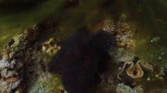 octopus - stock footage