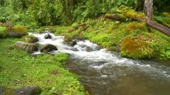 Jungle stream, Panama. lush green undergrowth Stock Footage