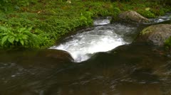 Jungle stream with small rapids, Panama Stock Footage