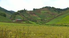Agriculture, hillside veggie farming, Cerro Punta valley, Panama Stock Footage