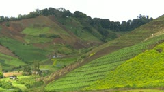 Agriculture, hillside veggie farming medium shot, Cerro Punta valley, Panama Stock Footage