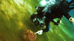 Diver vith sea grass Stock Footage