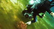 Stock Video Footage of diver vith sea grass