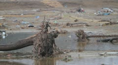 Japan Tsunami Aftermath- Dead Tree and Death Stock Footage