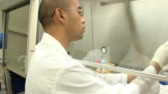Lab Worker in Biosafety Cabinet Setup Stock Footage