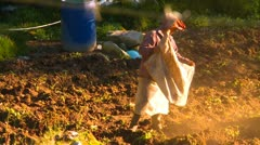 Agriculture, farmer fertilizing crops by hand Stock Footage