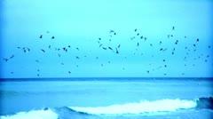 Ocean Guls Stock Footage