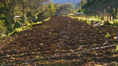 Agriculture, freshly hoed veggie plot in field, Panama Stock Footage