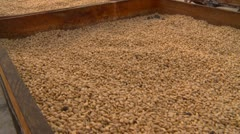 Agriculture, coffee bean process, drying tables Stock Footage