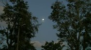 Stock Video Footage of afternoon full moon between trees