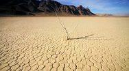 Petrified Tree Desert Landscape Stock Footage