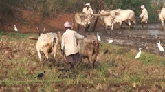 Indian Farmers at dawn Stock Footage