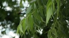 Foliage 3 - stock footage