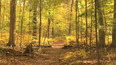 Indiana fall woods path 31h Stock Footage